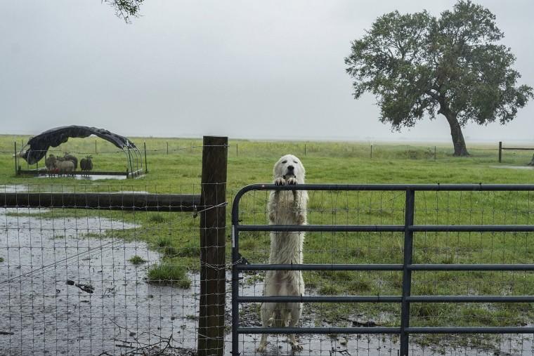 Image: *** BESTPIX *** Hurricane Delta Takes Aim At Louisiana's Gulf Coast