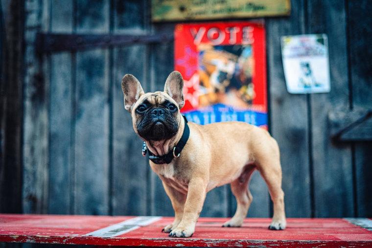 Wilbur, the dog mayor of Rabbit Hash, Ky.