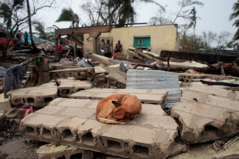 Image: A dog sleeps over the debris of a house destroyed by the passing of Hurricane Iota, in Puerto Cabezas