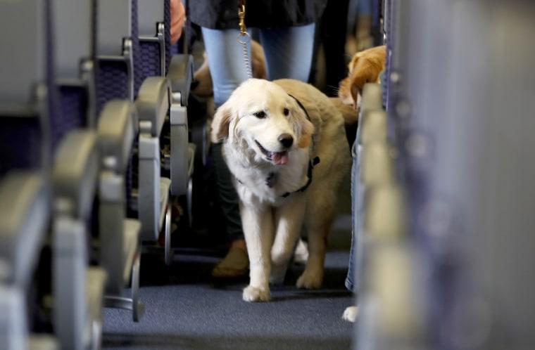 Image: airplane service dog