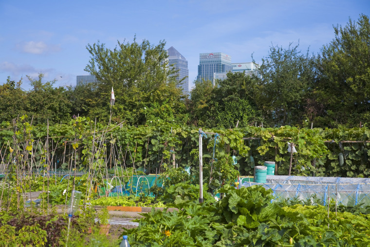 Image: Allotments in London suburbs with skyscrapers in the background.
