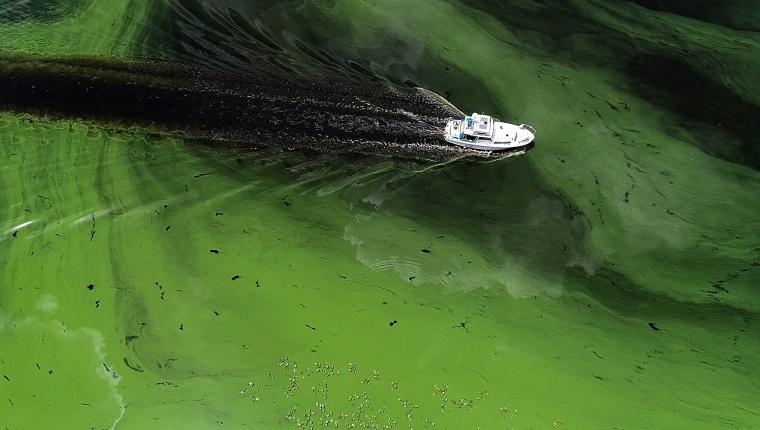 Image: Algae bloom