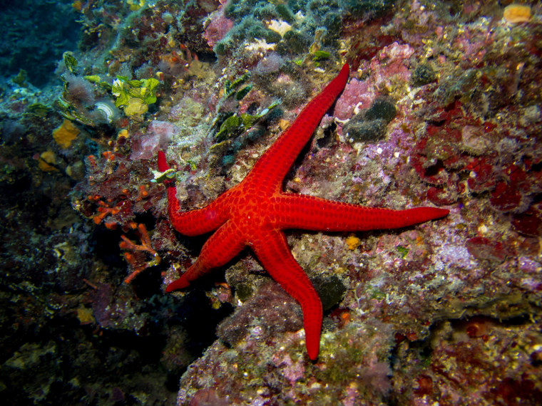 FRANCE-NATURE-ANIMAL-SEA