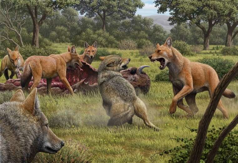 Image: Dire wolf