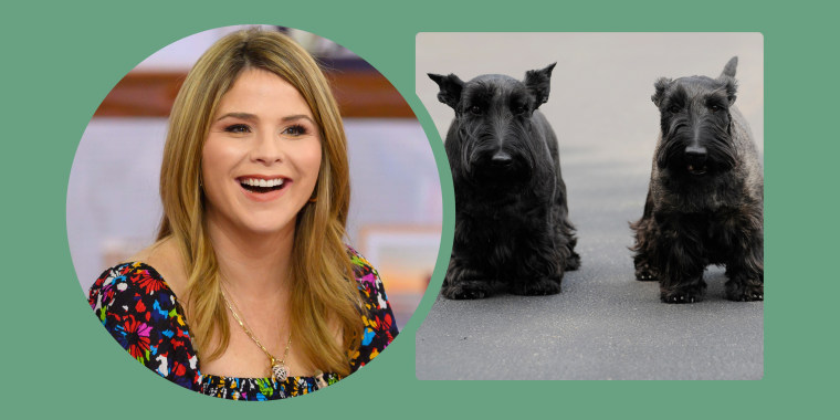 TODAY's Jenna Bush Hager recalled how her parents' Scottish terriers, Barney and Miss Beazley, were prickly customers.