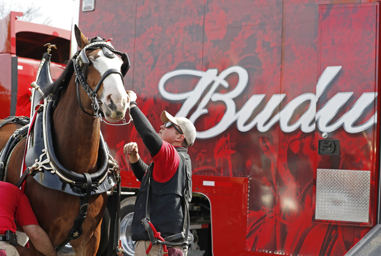The iconic Budweiser Clydesdales kick-off Super Bowl weekend in Atlanta in 2019.
