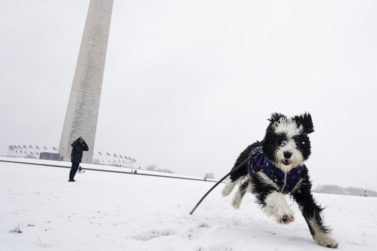 Winnie the sheepadoodle plays in the snow on the National Mall on Jan. 31, 2021 in Washington.