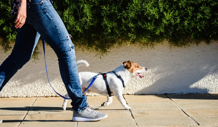 Image: Walking a dog on a street, These are the 8 best harnesses for your dog in 2021. Find the best no pull and easy walker dog harnesses from Amazon, Walmart, Chewy, REI and more.