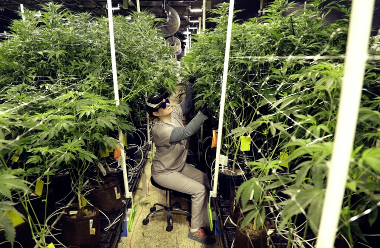 Image: Heather Randazzo, a grow employee at Compassionate Care Foundation's medical marijuana dispensary, trims leaves at the company grow house in Egg Harbor Township, New Jersey, on March 22, 2019.