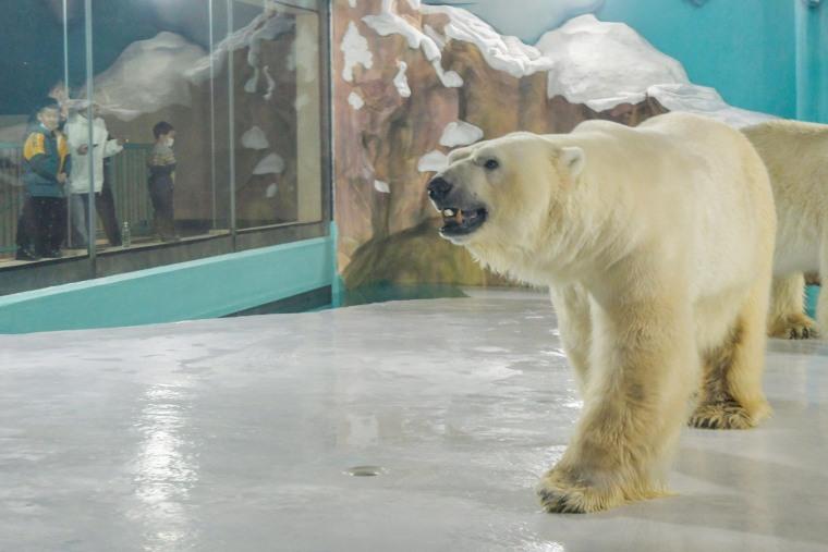 Hotel con osos polares en China es criticado por asociaciones.
