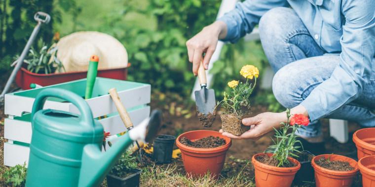 Woman wearing blue jeans, gardening in her yard