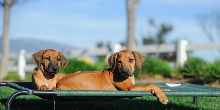 Two little puppies lounging outside on a green platform outdoor dog bed