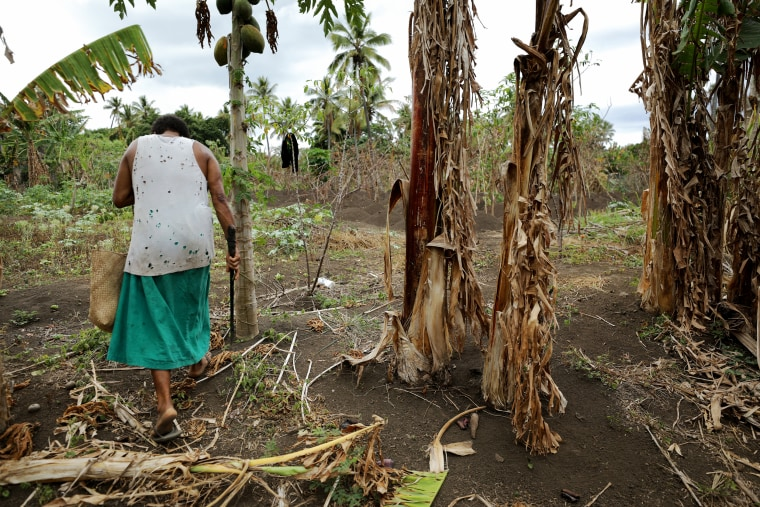 Image: Helena Iesul searches for vegetables to collect from her family garden in Tanna, Vanuatu, in 2019. Iesul says an extended dry season has affected her plants.