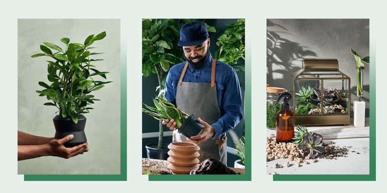 Three images of hands holding a planter and plant from the Target x Hilton Carter launch, Hilton Carter holding a plant, and a plater house in gold