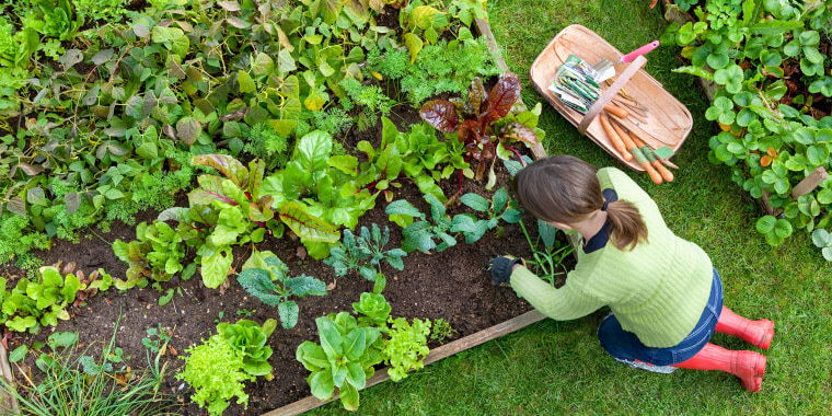 Here are the best raised garden beds to plant a garden almost anywhere. Shop raised garden beds from Home Depot, Amazon, Walmart and more.
