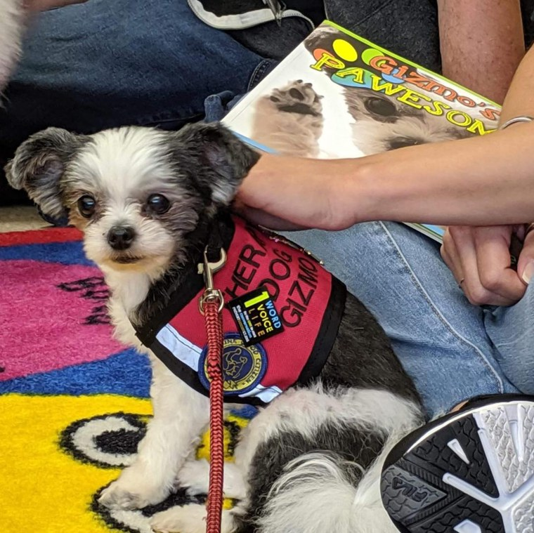 Gizmo the therapy dog is the face of a new kids' mental health curriculum