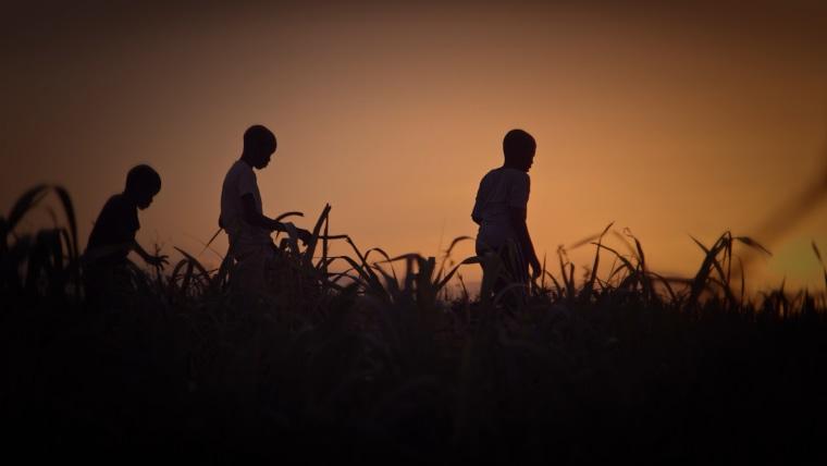 Young boys run through a Dominican sugar cane field.