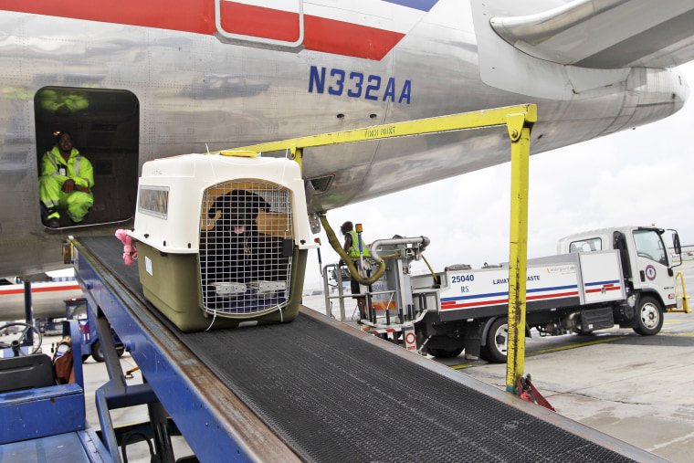 Image: American Airlines, dog travel carrier