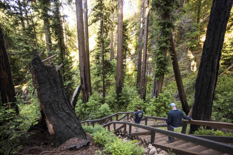 Image: People walk along the Pfeiffer Falls Trail in California's Pfeiffer Big Sur State Park on June 1, 2021.