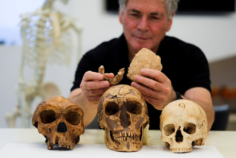 Image: Nesher Ramla - pieces of fossilised bone of a previously unknown kind of early human discovered in Israel