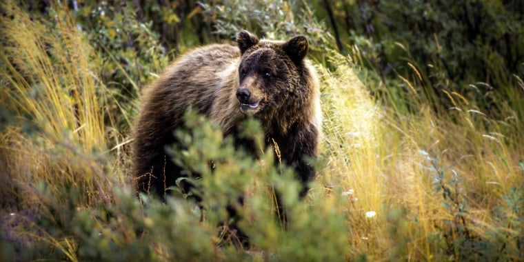 A camper in the small Montana community of Ovando was killed by a grizzly bear early Tuesday.
