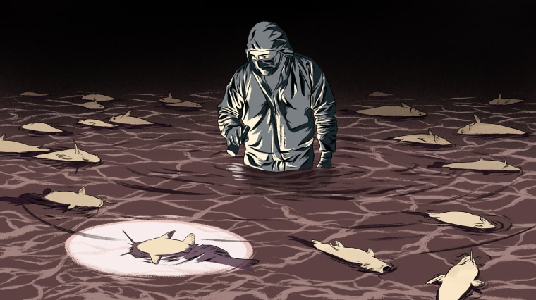 Illustration of an investigator with a flashlight wading through water with dead catfish.