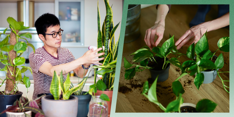 Man caring for his indoor plants and a Person planting green plants into new pots