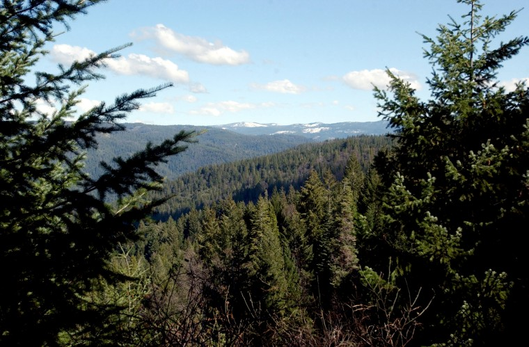 A family of three and their dog were found dead on a hiking trail in a remote area of the Sierra National Forest on August 17, 2021.