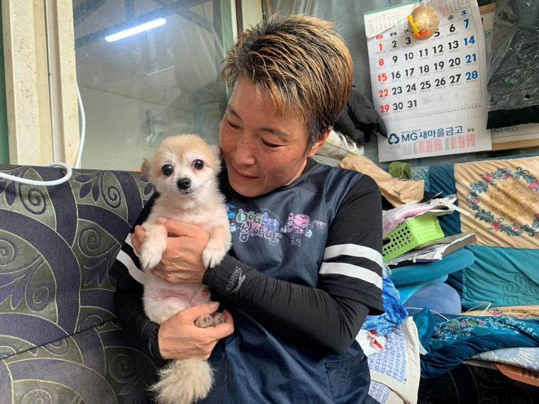 Image: Kim Gea-yeung, manager of an animal shelter for abandoned dogs and cats, holds Jin-hui, a five-year-old Pomeranian dog, who was rescued in Anseong, South Korea
