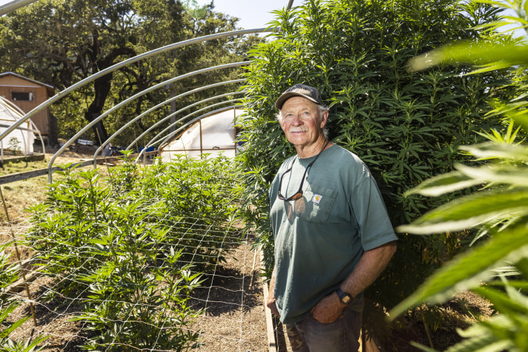 Manning, a cannabis cultivator in Humboldt County, Calif., also works as a volunteer fire chief.