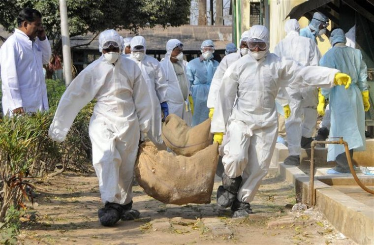 Health workers carry culled poultry for disposal at Gandhigram village