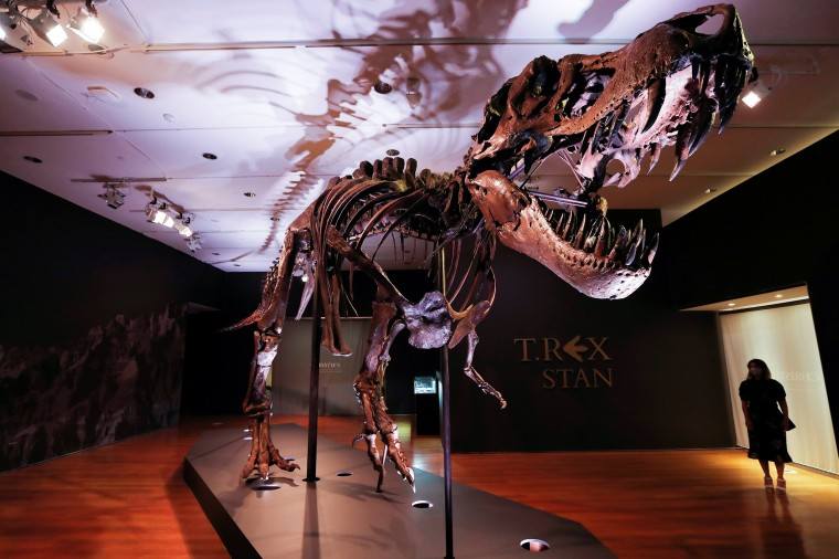 """Image: Tyrannosaurus Rex skeleton """"STAN"""" on display ahead of being auctioned by Christie's in New York"""