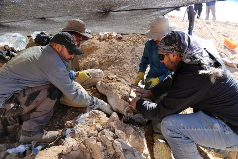 Image: Scientists discover remains of fearsome marine predator at Atacama desert