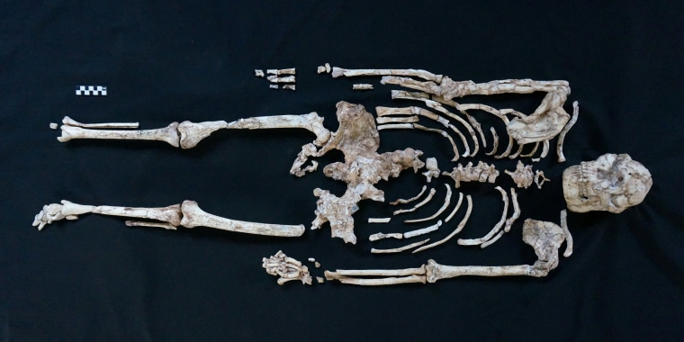 A skeleton of Little Foot