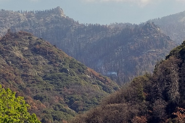 A single giant sequoia burning in Board Camp Grove from the 2020 Castle Fire in the southwestern area of Sequoia National Park.