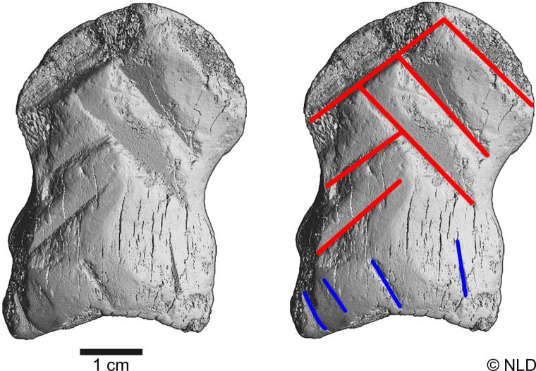 Image: Engraved bone