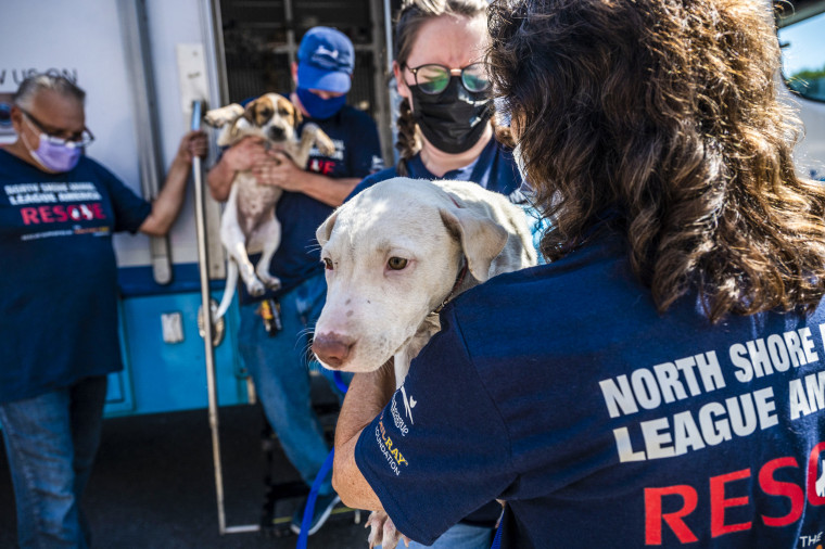 Volunteers and staff members at the North Shore Animal League in Port Washington, N.Y., welcomed more than 50 dogs and puppies rescued from shelter partners in Shreveport, La., on Sept. 6, 2021.