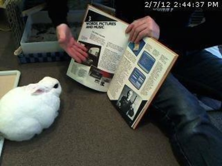 Roebling, the Brooklyn Bunny
