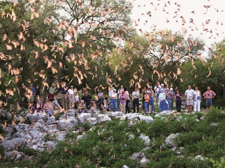 Bats emerge from the Bracken Bat Cave in New Braunfels, Texas.