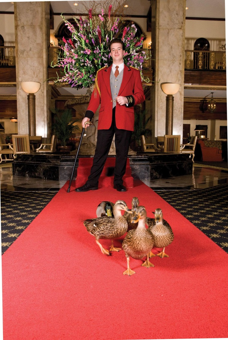 Duckmaster Anthony Petrina has an enviable job -- leading a team of ducks on a march twice a day.