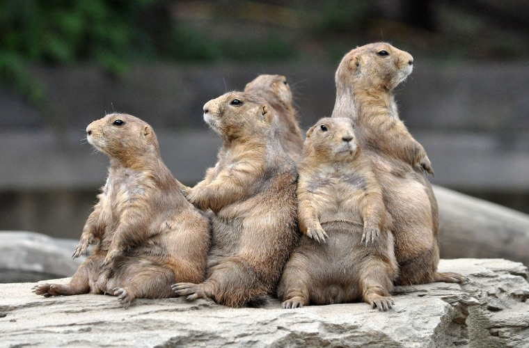 Prairie dogs in Arizona. Post your best caption in the comments below!