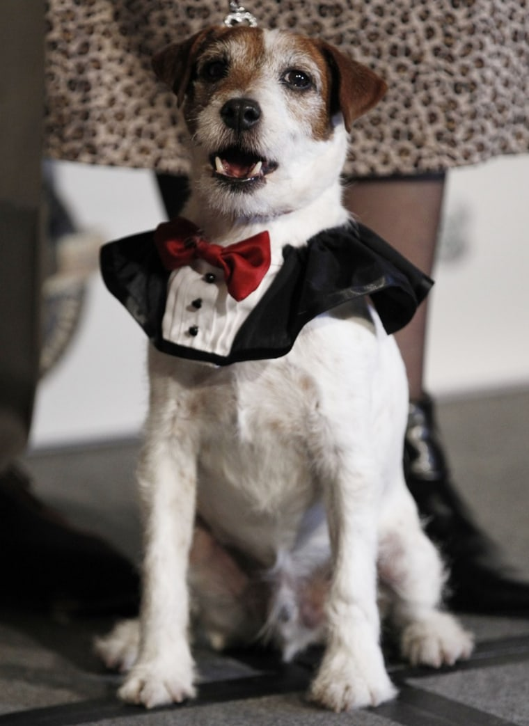 """A new book is planned on the life of \""""Uggie,\"""" canine star of \""""The Artist.\"""""""
