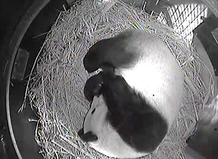 Female giant panda Bai Yun gave birth to a record sixth cub at the San Diego Zoo on Sunday. The 20-year-old panda is one of the oldest giant pandas known to give birth to a cub, and set a record for the most cubs born at a breeding facility outside of China.