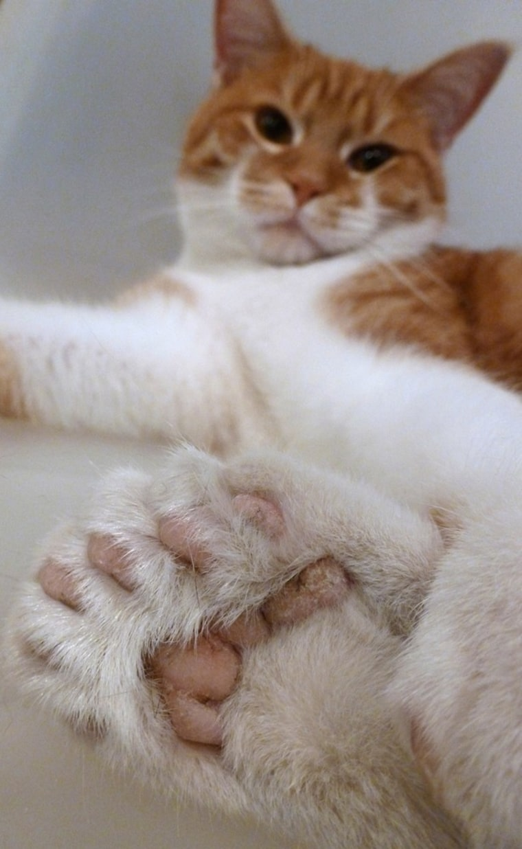 Daniel displays a paw with two extra toes.