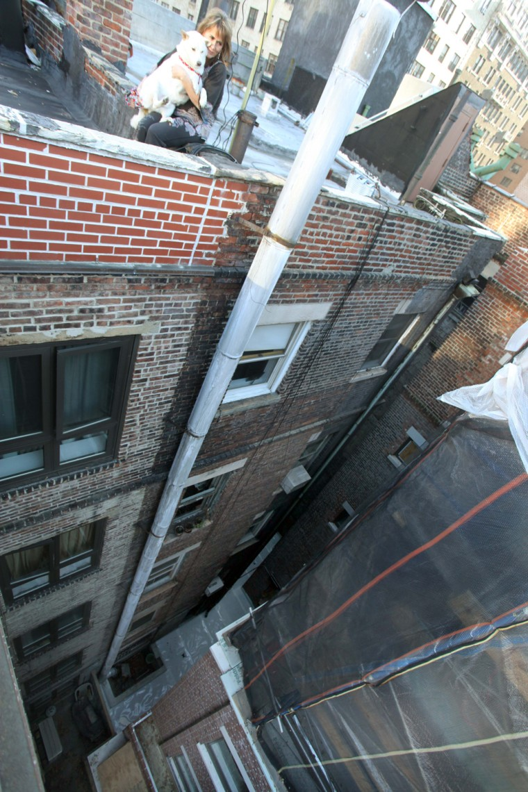 Kai, a 2-year-old Shiba Inu, plunged 50 feet from this rooftop.