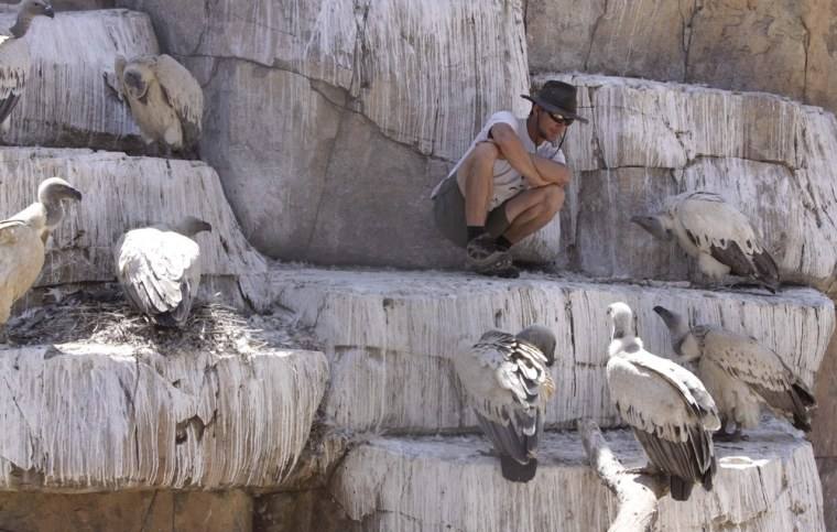 Researcher Walter Neser squats down with Cape vultures at the Vulture Program.