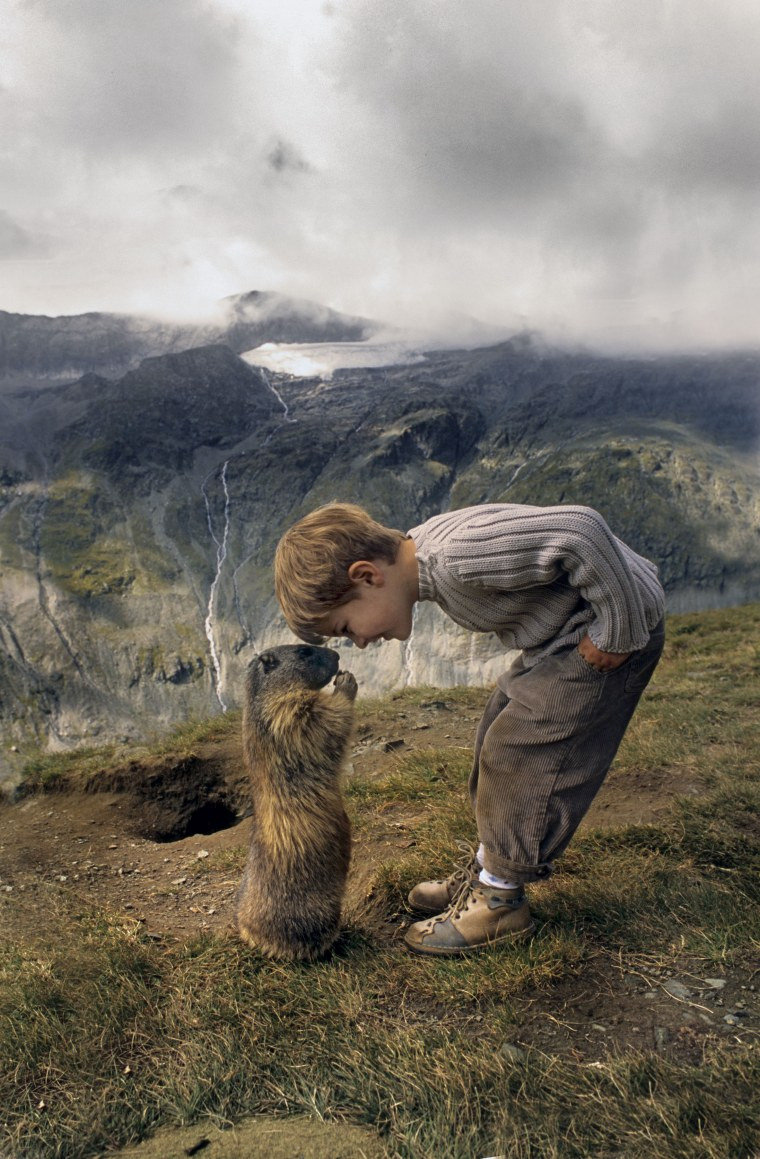 Nose to nose: Matteo has gained the marmots' affection through imitating their gestures and spending time with them.