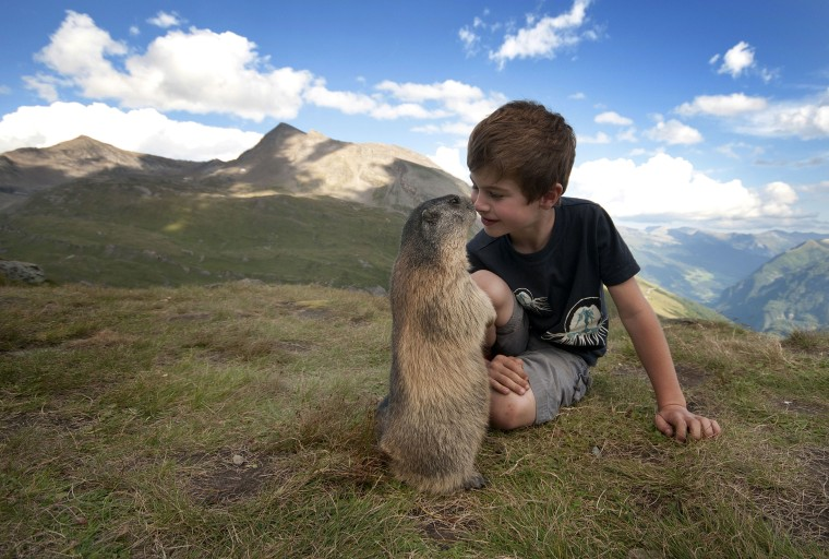 Eye to eye: Matteo Walch interacts with a normally skittish marmot in the Austrian Alps.
