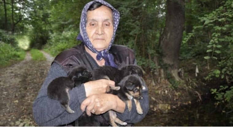 Rescue Tale Faked To Save Puppy Throwing Girl