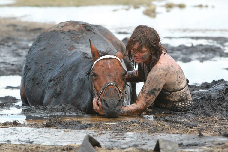 Feature Rates Apply.Mandatory Credit: Photo by Newspix/Rex / Rex USA (989619d)Nicole Graham comforts her 18-year-old horse 'Astro' as members of the Country Fire Authority (CFA) and the State Emergency Services (SES) attempt to free the 500kg horseHorse rescued from thick mud at Avalon Beach in Geelong, Victoria, Australia - 26 Feb 2012Saved from tidal terrorIT was a race against the tide that pulled at the heartstrings. For three hours yesterday, show horse Astro was stuck neck deep in thick mud at Avalon Beach on Corio Bay as the tide inched closer. Rescue crews first tried to pull the 18-year-old, 500kg horse free with fire hoses, and then a winch before a vet turned up to sedate Astro and pull him clear with a tractor. The crews knew by 5pm the tide would have come all the way in. But within minutes of the waters rising around him, Astro was being dragged up on to solid ground slowly but surely, the team filthy but ecstatic. Owner Nicole Graham (above) said she and daughter Paris, 7, set off at noon when without warning she sunk up to her waist in thick, smelly muck.